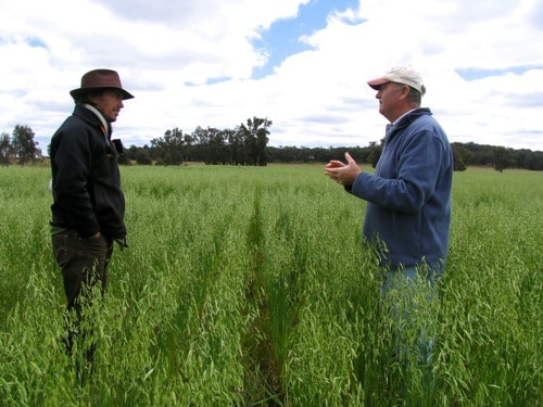 Darren Doherty and Col Seis discussing pasture cropping in Col's pasture cropped oatfield