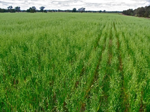 Why pasture cropping is such a Big Deal - Milkwood