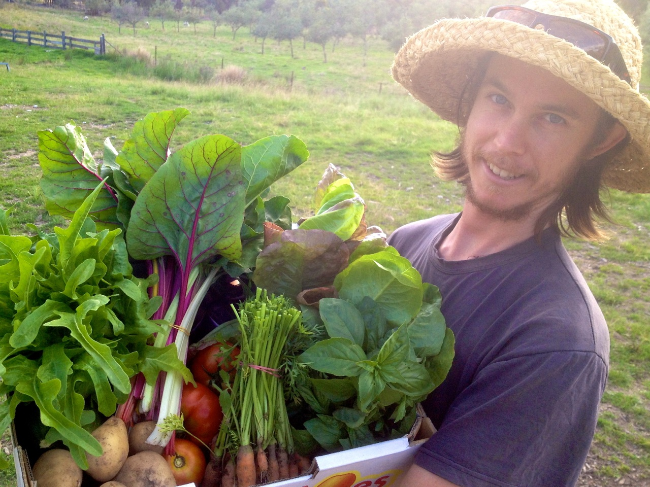 Michael Hewins With A Big Bunch Of Organic Veggies