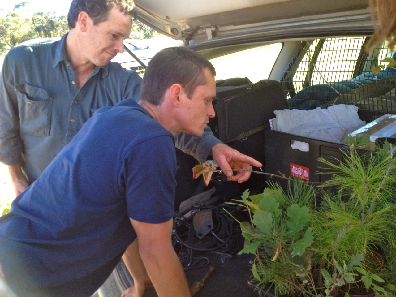 Paul (Speedy) shows Cam his latest generous batch of plant material that he's gifting to the Milkwood arboretum