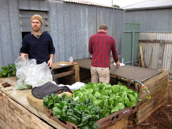 wagtail urban farm09