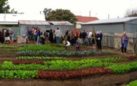 wagtail urban farm20