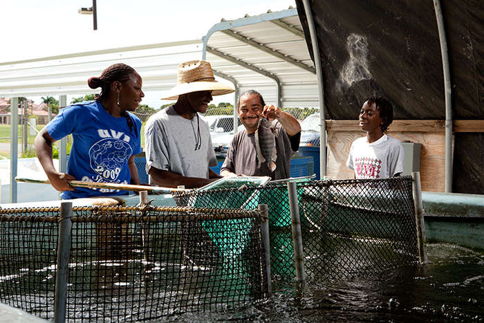 Students in the tilapia nursery at the University of the Virgin Islands aquaculture unit