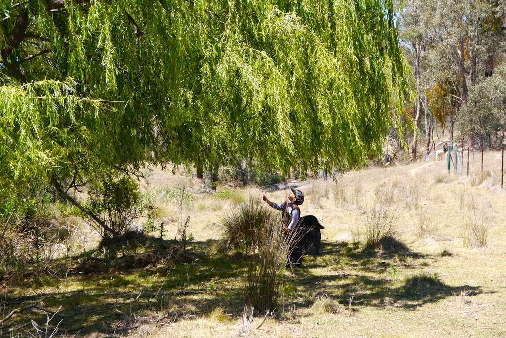 1401 willow tree - 07