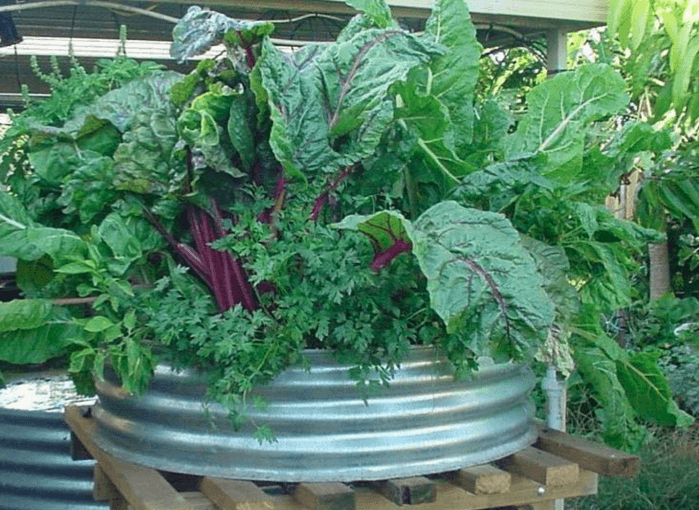 Backyard aquaponics system - via Backyard Aquaponics magazine