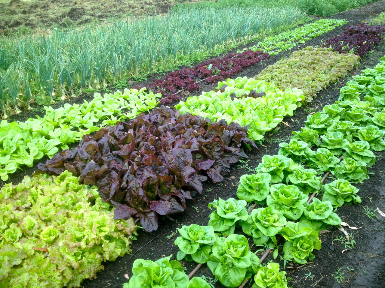 Why to balance your soil: to grow awesome veggies like these, of course!