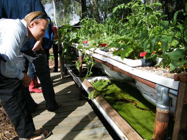 5 Great Fish options for your Backyard Aquaponics System