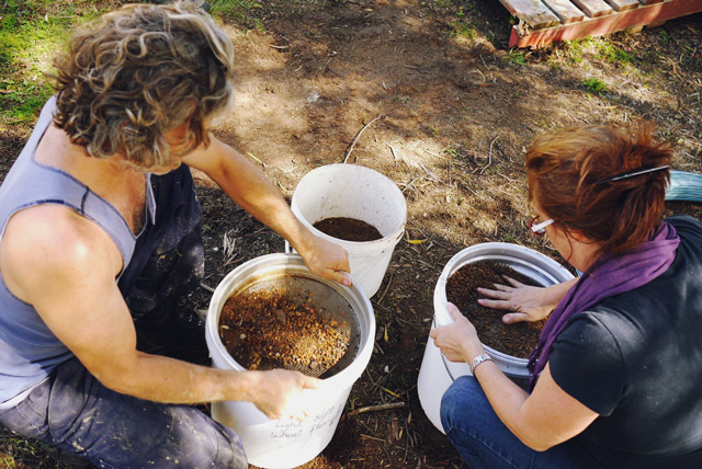 sieving clay at Milkwood's Natural Building course