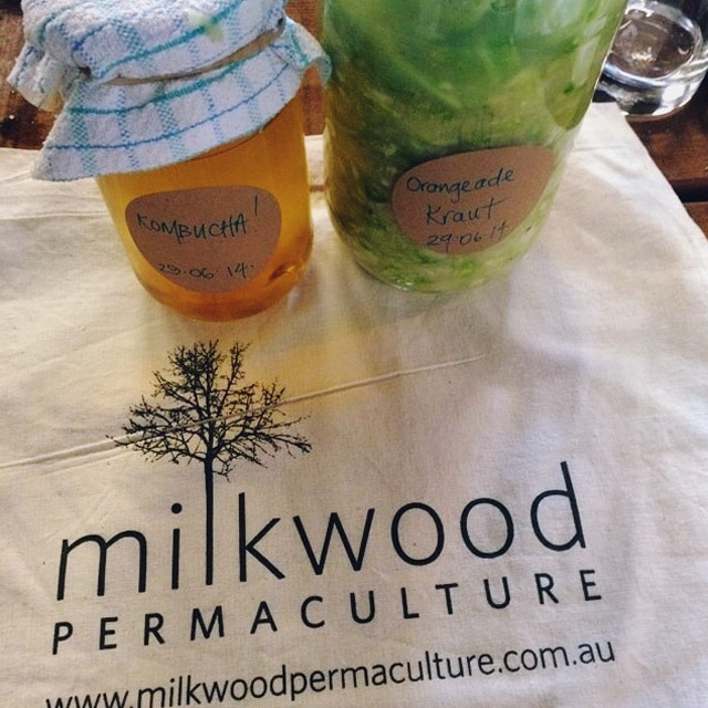 fermentation workshop goodies