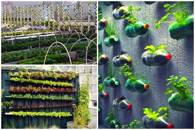 Researching: DIY vertical garden ideas that actually look good ...
