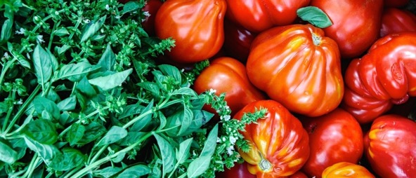 How to grow the Best Ever Tomatoes
