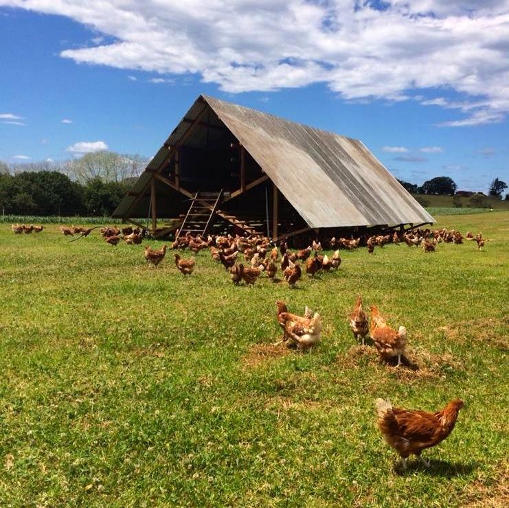 1411 The Farm - 10
