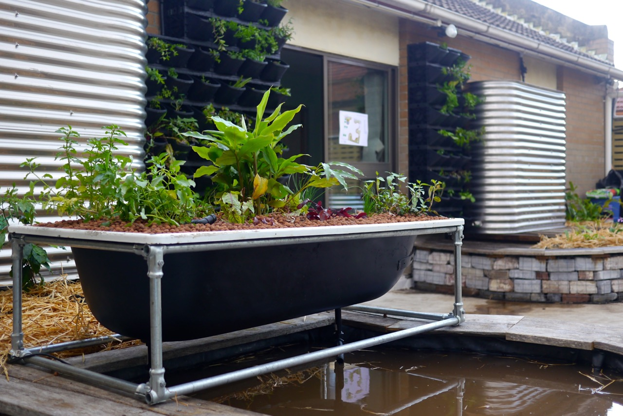Making A Diy Bathtub Aquaponics System Milkwood