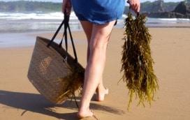 1501 seaweed foraging - 16