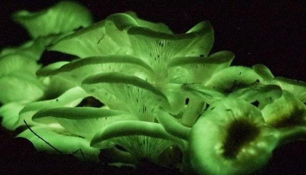 ghost fungus 046