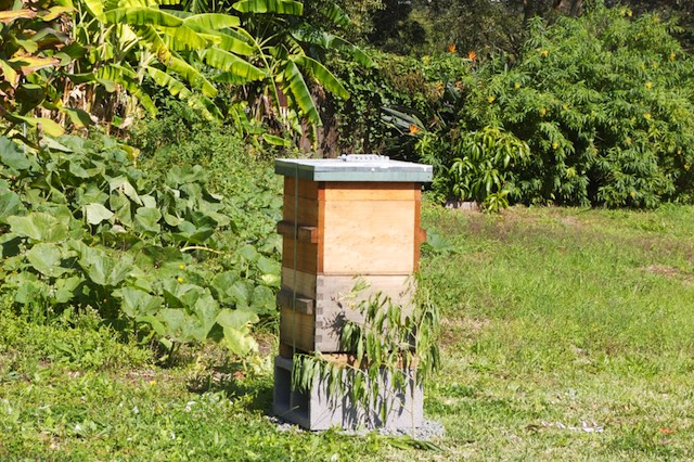 Autumn Beginner Beekeepers 2