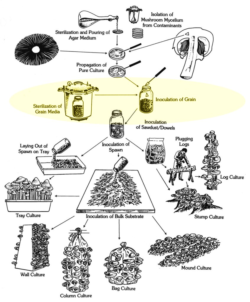 How to make mushroom grain spawn at home mushroom cultivation diagram paul stamets pooptronica Images
