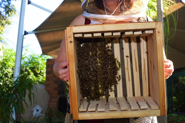 Natural Beekeeping Tips For Catching A Swarm