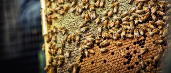 Natural Beekeeping article