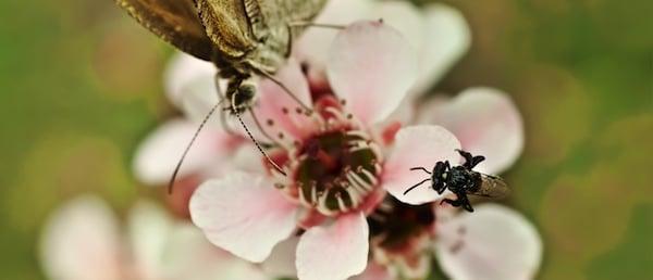 wild pollinator count 363