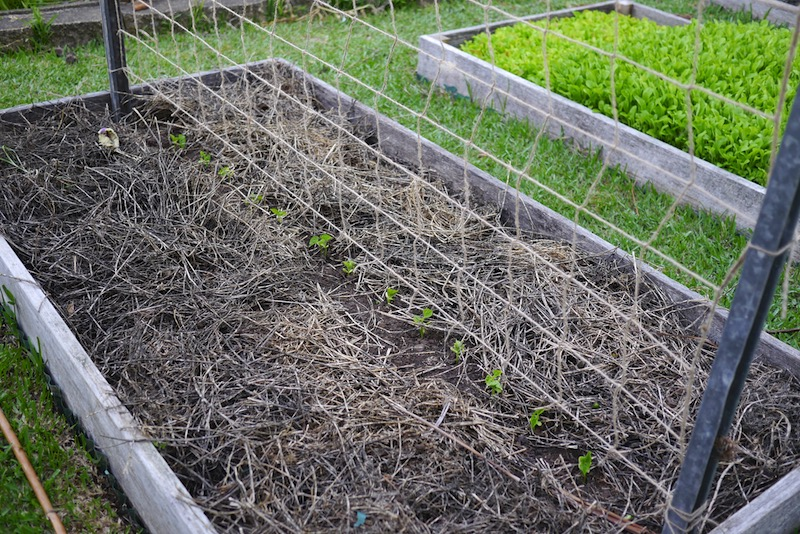 diy trellis ideas for beans peas and how theyre different