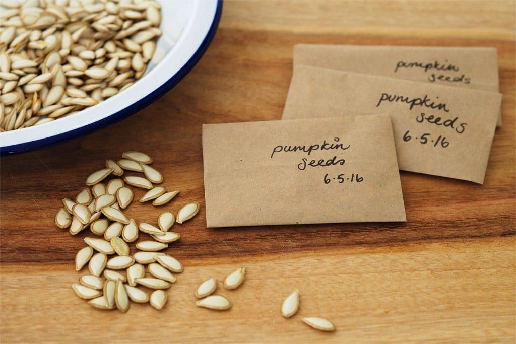 Pumpkin Seeds Save Them Eat Plant Milkwood