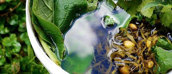 Making seaweed fertiliser