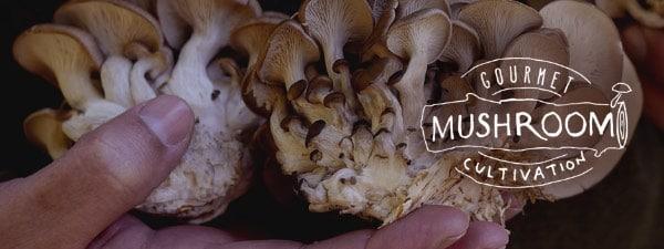 gourmet mushroom cultivation GMC
