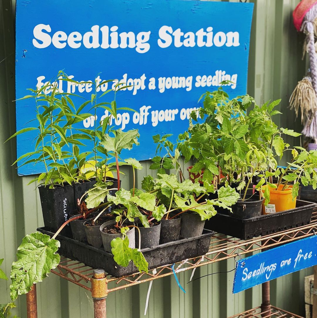 Seedlings available free at Food is Free.
