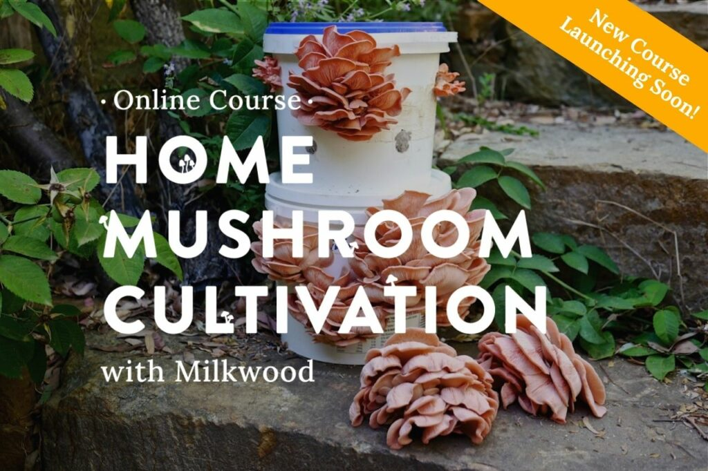 Home Mushroom Cultivation course launches soon