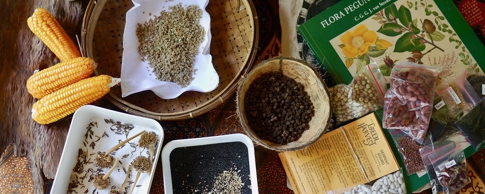 Get started with seed saving